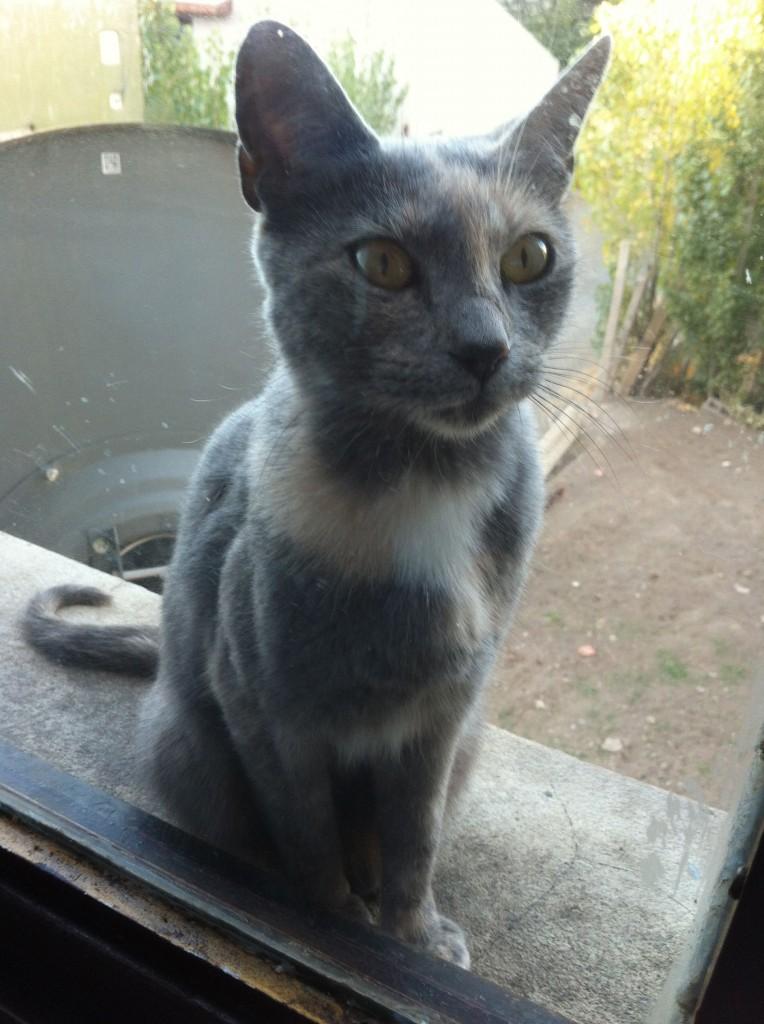 宿にいる猫。外に干している僕の洗濯物で遊び、毛をつけてくれるで有難い。