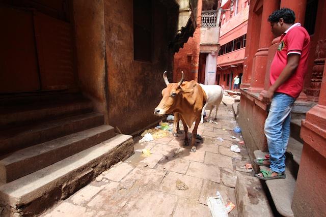 1ウンコと牛の路地