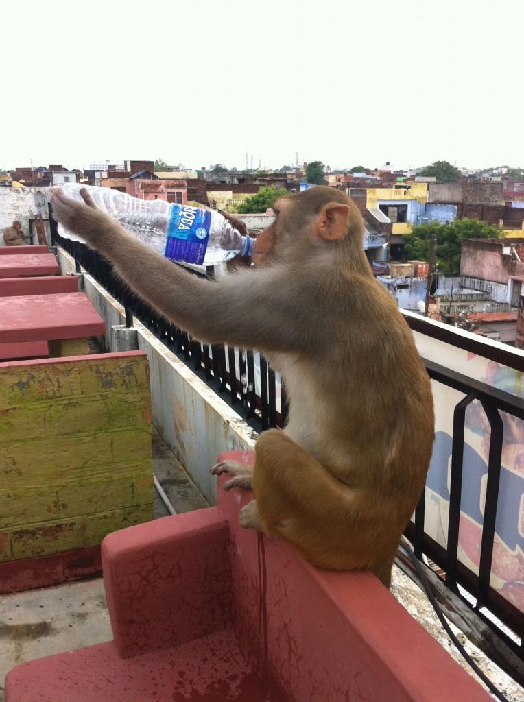 猿が水を飲む